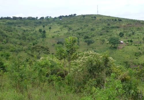 Land shot